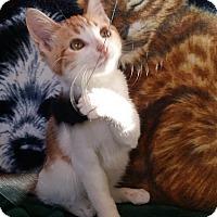 Adopt A Pet :: Hamlet - Palmdale, CA