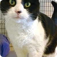 Adopt A Pet :: Minnie - Victor, NY