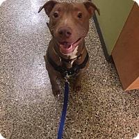 Adopt A Pet :: Pablo Escobark - Frankfort, IL