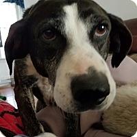 Adopt A Pet :: Sue - Richmond, VA
