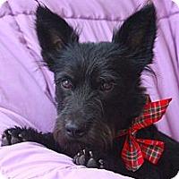 Adopt A Pet :: RAVEN - san diego, CA