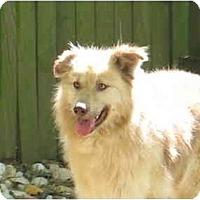 Adopt A Pet :: Phoenix - Alexandria, VA