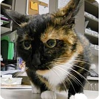 Adopt A Pet :: Julliette - Maywood, NJ