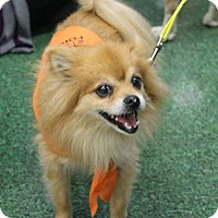 Adopt A Pet :: Andy - Morgantown, WV