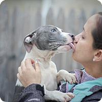 Adopt A Pet :: Ash - Reisterstown, MD