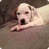 Adopt A Pet :: Eva - Marlton, NJ