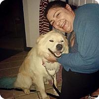 Adopt A Pet :: Bayou - Sacramento, CA