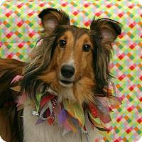 Adopt A Pet :: Benji - Mission, KS