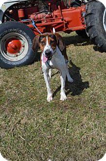 Bellefontaine Dog Rescue