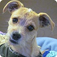 Adopt A Pet :: ELVIS - Torrance, CA