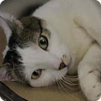 Adopt A Pet :: Mousey - New York, NY