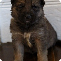 Adopt A Pet :: RIKON - Winnipeg, MB