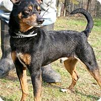 Adopt A Pet :: Pepe - Canterbury, CT