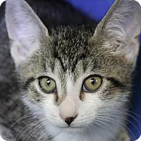 Adopt A Pet :: Renaldo - Sarasota, FL