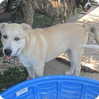 Adopt A Pet :: Marley - Copperas Cove, TX