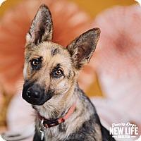 Adopt A Pet :: Etza - Portland, OR