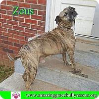 Adopt A Pet :: Zeus - Pensacola, FL