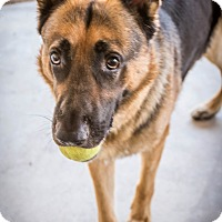 Adopt A Pet :: Riddick - Phoenix, AZ