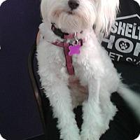 Adopt A Pet :: Kimber - Thousand Oaks, CA