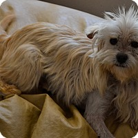 Adopt A Pet :: Trixie - Simi Valley, CA