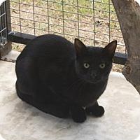 Adopt A Pet :: Sullivan - Monroe, LA