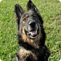 Adopt A Pet :: PRISCILLA - West Palm Beach, FL
