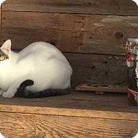 Adopt A Pet :: Penny - Del Rio, TX