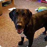 Adopt A Pet :: Nolan - Laingsburg, MI