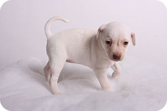 Snow   Adopted Puppy  ...