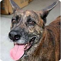 Adopt A Pet :: Bosco - Canoga Park, CA