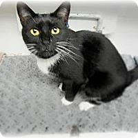 Adopt A Pet :: Mai Lee - Huntington, NY