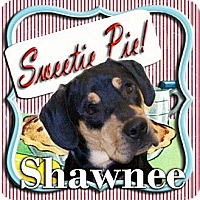Rottweiler/Hound (Unknown Type) Mix Dog for adoption in Mechanicsburg, Pennsylvania - Shawnee