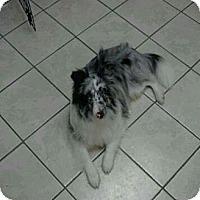 Adopt A Pet :: Banner - Alderson, WV