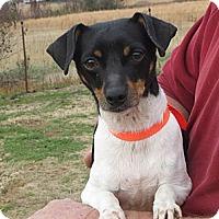 Adopt A Pet :: Doc - Salem, NH