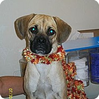 Adopt A Pet :: Misty - Winchester, CA