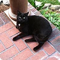 Adopt A Pet :: Stormy - Waxhaw, NC