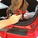Adopt A Pet :: Buster  mini