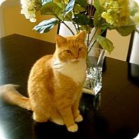 Adopt A Pet :: * Meow - Monroe, NC