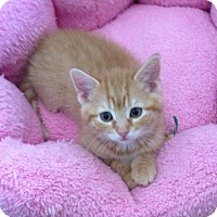 Adopt A Pet :: Ginger - Horsham, PA