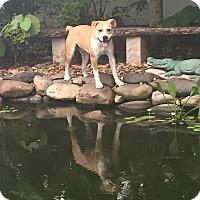 Adopt A Pet :: Wrangler - Port Charlotte, FL