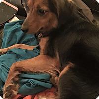 Adopt A Pet :: Rusty - Georgetown, KY