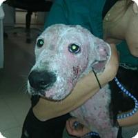 Adopt A Pet :: Xena 2 FOSTER NEEDED!! - Hewitt, NJ