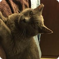 Adopt A Pet :: Mika - Long Beach, CA