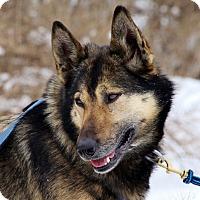 Adopt A Pet :: Mona - Jefferson, NH