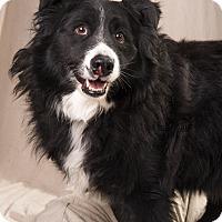 Adopt A Pet :: Barber BC - St. Louis, MO