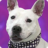 Adopt A Pet :: Rae - Cincinnati, OH