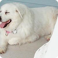 Adopt A Pet :: Zoe (Katrina) - Kyle, TX
