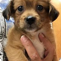 Adopt A Pet :: Peace - Ft. Lauderdale, FL