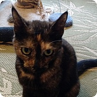 Adopt A Pet :: Spice - Wakinsville, GA