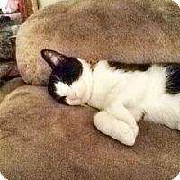 Adopt A Pet :: CRISSY - Brea, CA